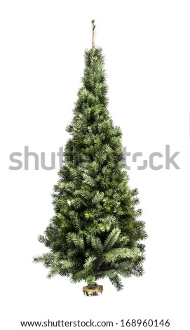 Spruce tree isolated on white background with clipping path #168960146