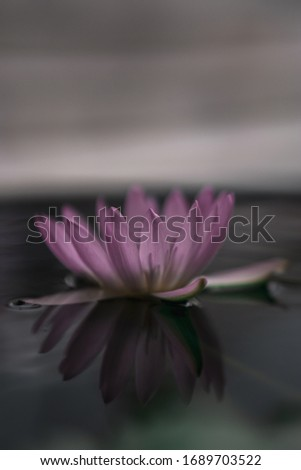 Flower in a small pond at the Grand Palace in Bangkok #1689703522