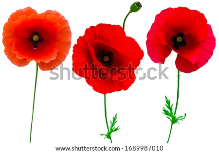 poppies flowers collection isolated on white background