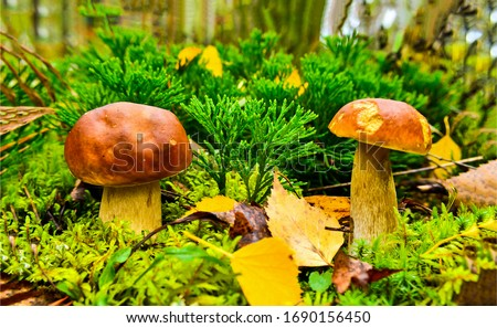 Mushrooms in autumn forest scene. Autumn forest mushrooms #1690156450