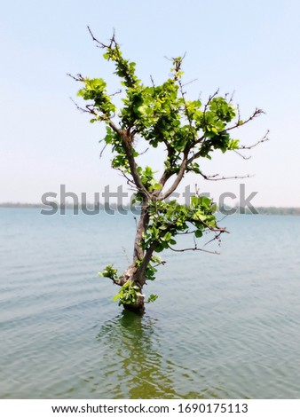 Lakeside blue water with island and green tree. blue sky,water surface teexture,with brightness, shore and sunny day.water background.. #1690175113