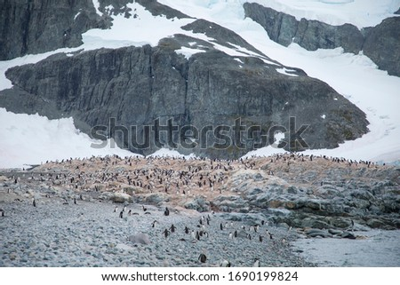 this is a picture shown the scale of the Gentoo penguin's habitat
