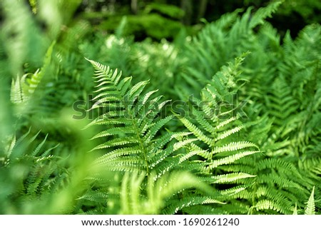 close up of green ferns in a botanical garden Royalty-Free Stock Photo #1690261240