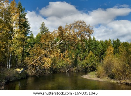 Far east wild forest river. Autumn red and yellow color foliage falls and fly by wind over the taiga river. Old birch overhangs over calm wild river. Bright sunny day landscape #1690351045