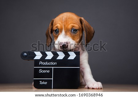image of dog clapper board dark background