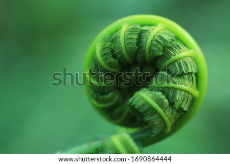 Beautiful Close Up View Of Fresh Green Young Wild Ferns Plantation Bud In Spiral Form With Shallow Depth Of Field In The Forest #1690864444