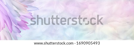 Multicoloured pastel Angel Feather Message Banner Background - a pile of long rainbow coloured feathers in left corner and wide message area with pastel coloured small random fluffy feathers   #1690905493
