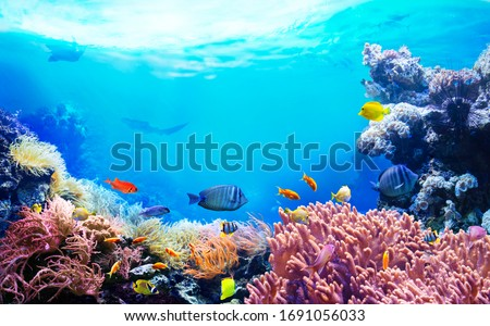 Animals of the underwater sea world. Ecosystem. Colorful tropical fish. Life in the coral reef.  #1691056033
