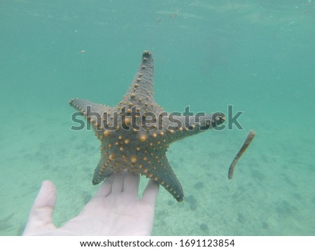 Underwater photo of a big brown/grey starfish with orange dots balancing on a hand in green/blue water.