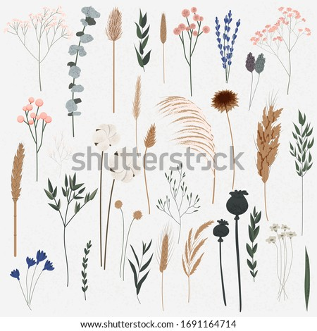 Vector set of boho plants. Beautiful wild grass and flowers. Collection of floral elements: pampas grass, poppy heads, lavander, cotton and other. Stylish flat elements for your design Royalty-Free Stock Photo #1691164714
