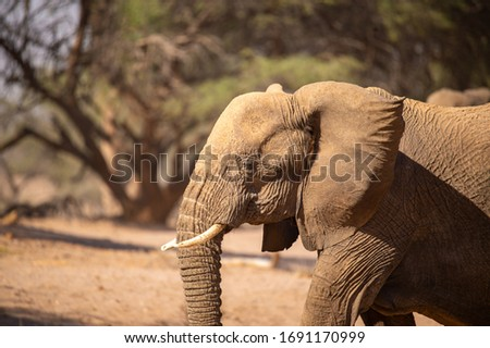 African elephant in the wild Royalty-Free Stock Photo #1691170999