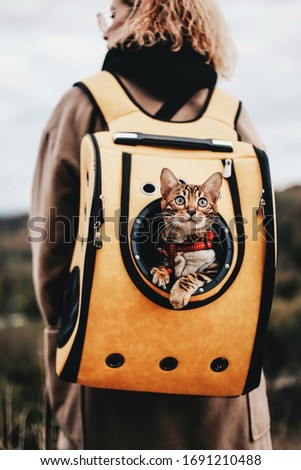 The cat travels in a backpack (carry) on the back of the owner on vacation. Cat in a backpack. Cat Porthole Backpack. Cat in the backpack with porthole. #1691210488