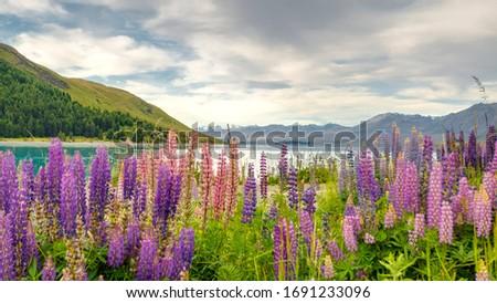 Wild flowers. New Zealand landscape