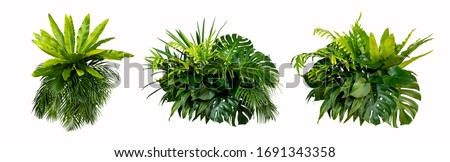 Green leaves of tropical plants bush (Monstera, palm, rubber plant, pine, bird's nest fern) floral arrangement indoors garden nature backdrop isolated on white background thailand, clipping path.  #1691343358