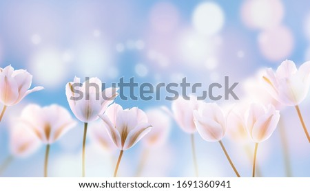 beautiful blooming tulip field on abstract blue sky in springtime, floral concept #1691360941