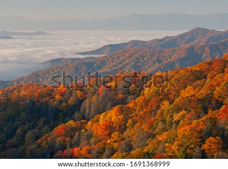 Autumn landscape of the Smoky Mountains in fog, Deep Creek Overlook, Great Smoky Mountains National Park, North Carolina, USA