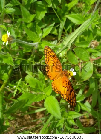 colorful, beautiful butterfly picking nectar from flowers #1691600335