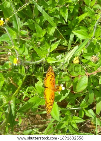 a colorful, beautiful butterfly picking the nectar from the flowers #1691602558