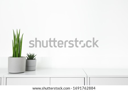 Plants on a grey commode or table and white wall. Minimal home design. #1691762884