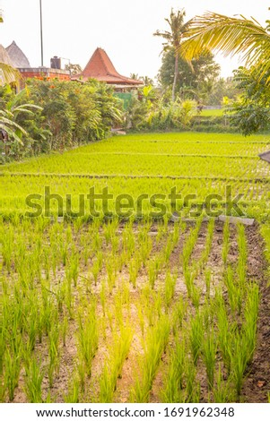 Rice plantation in Bali, Indonesia #1691962348