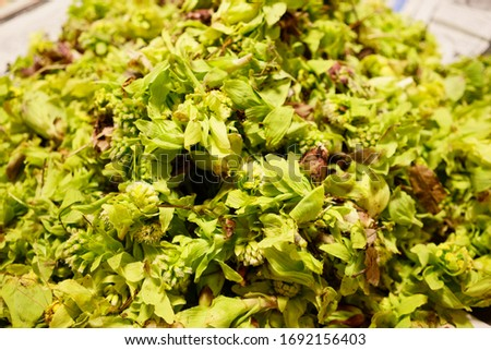 Butterbur scape is a edible wild plant which can be harvesed in mountains around spring. #1692156403