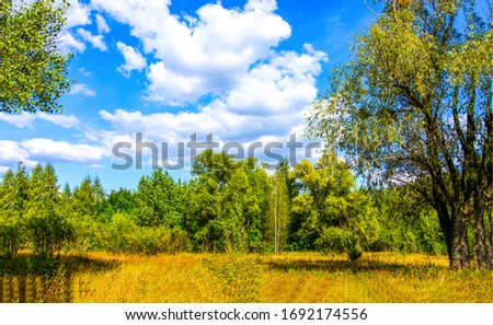 Forest meadow in sunny day. Meadow forest landscape. Sunny day in meadow forest #1692174556