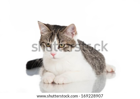 Young domestic cat isolated on white #169228907