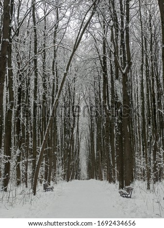 Snowfall in pine wood at christmas #1692434656