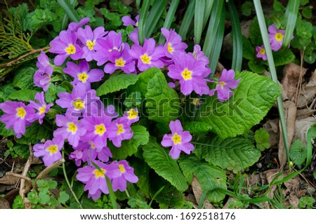 Sprouting plant in  spring, Bulgaria Royalty-Free Stock Photo #1692518176