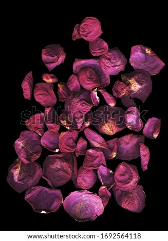 Premium dry red roses against bright dark background, top view. Close-up of dry petals of red roses on black background. Ideal for your ad, post, blog, social media. Empty space for text #1692564118