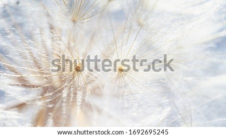 dandelion at sunset . Freedom to Wish. Dandelion silhouette fluffy flower on sunset sky. Seed macro closeup. Soft focus. Goodbye Summer. Hope and dreaming concept. Fragility. Springtime.