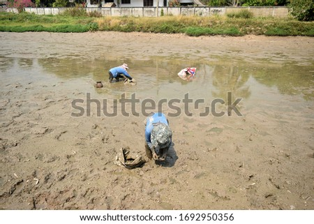 this pic show villager or farmer is pick the shells in dried pond after harvested fish product