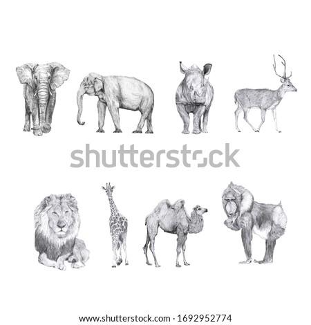 Set of animal drawings isolated on white background. African elephant, Asian elephant, rhino, deer, lion, giraffe, camel, mandrill monkey. Hand drawn pencil illustrations. Beautiful animal graphics.
