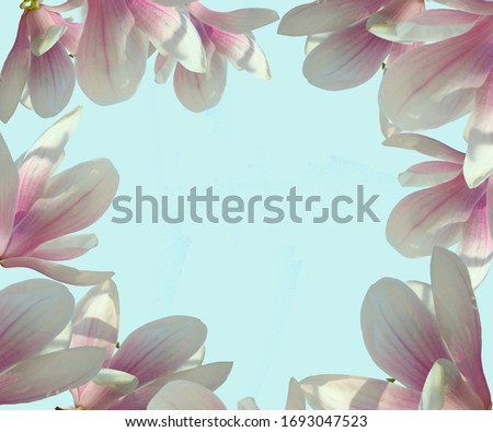 Pink magnolia flowers on a light delicate blue background in the form of a frame. Screensaver, background, flowers on the contour. Natural floral background, postcard, screensaver. Free space for your