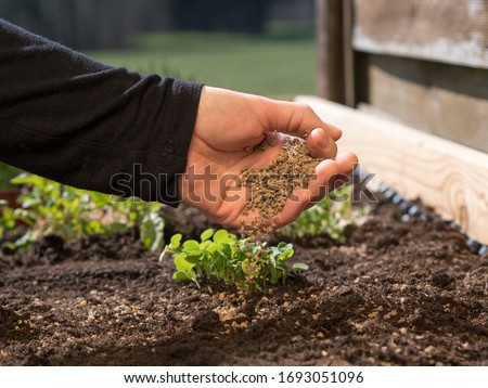 how to use organic fertilizer for organic farming or gardening; hand holding fertilizer close to soil or growing media - non gmo; how and what to feed your seedlings #1693051096
