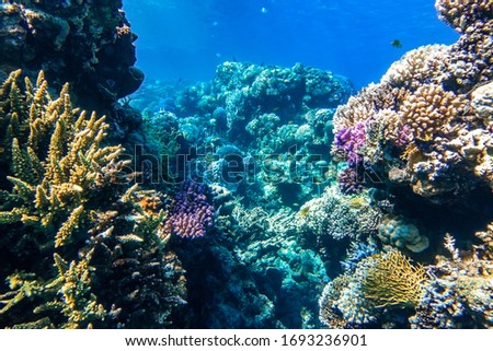 Coral Reef And Tropical Fish  In The Ocean, Red Sea. Blue Turquoise Water, Different Types Of Hard Corals (Branching, Massive, Fire), Living Corals, Underwater Diversity. #1693236901