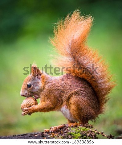 Squirrel, spring with nuts #169336856