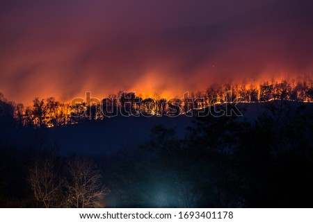wildfire if there are no firefighters entering the fire The fire will burn out until it cannot be controlled.save the forest.Forest fires burned everything, trees burned, grass burned. #1693401178