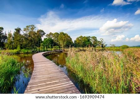 Wood Bridge under Blue Sky Royalty-Free Stock Photo #1693909474