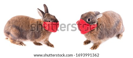 Easter rabbits with face mask isolated on a white background, covid-19, coronavirus, easter 2020, empty space for text