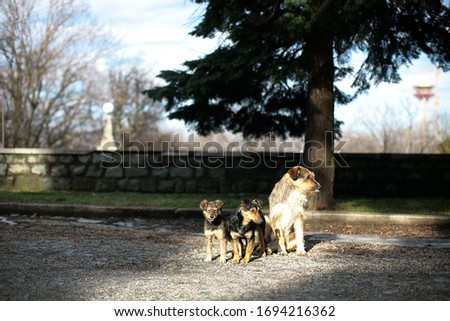 picture of a small pack of straying dog of mixed breed