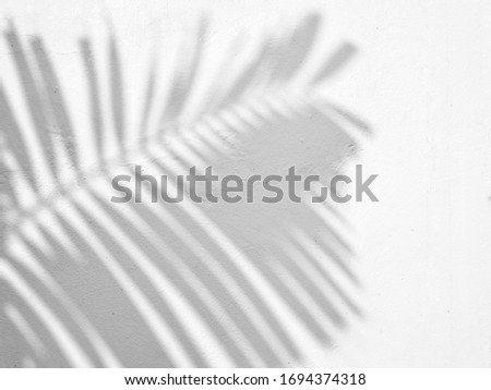 The shadow of the palm tree leaves on the wall. #1694374318