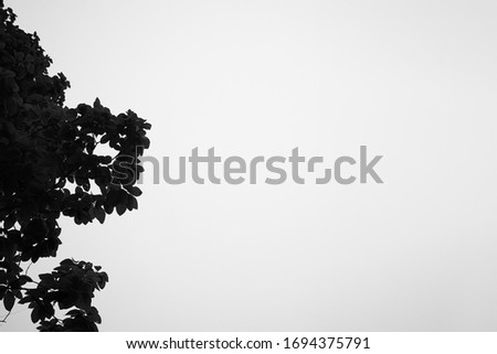 Black and white photo branch,Picture of a dry tree with a background sky,Trees in the dry season,Free space for filling text,Black and white picture,Trees and drought.
