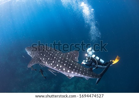 Once upon a time, scuba with whale shark.