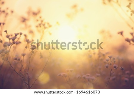 Nature backdrop. Beautiful Meadow with wild flowers over sunset sky. Beauty nature field background with sun flare. Easter nature backdrop. Bokeh, Silhouettes of wild grass and flowers Royalty-Free Stock Photo #1694616070