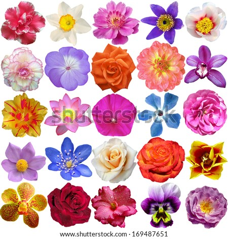 Set of Flower heads isolated on white #169487651