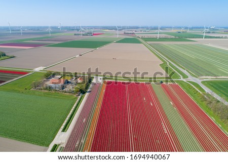 Colorful tulip field in the Netherlands from the air