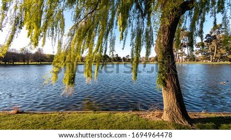 Christhurch Hagley park. New Zealand