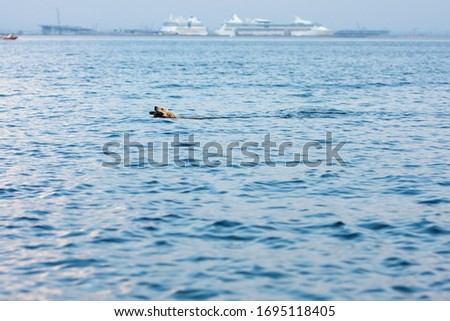 Retriever dog swim on blue water of sea with cane #1695118405