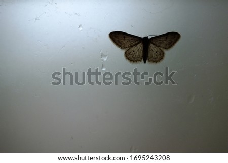 photo of a brown moth on a gray surface and water droplets #1695243208